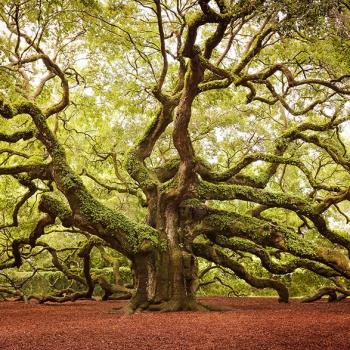 4.Мое гениологическое дерево.